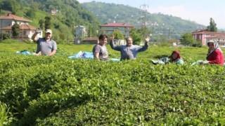Karadeniz'de çay ve fındık göçüyle vakalar yüzde 400 arttı