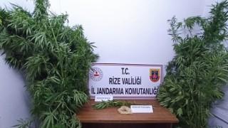 Rize'de uyuşturucu madde operasyonu.